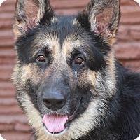 Adopt A Pet :: Sully von Sulzburg - Los Angeles, CA