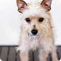 Adopt A Pet :: Noodle - Berkeley, CA