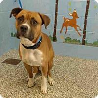 Adopt A Pet :: URGENT on 5/5 SAN BERNARDINO - San Bernardino, CA