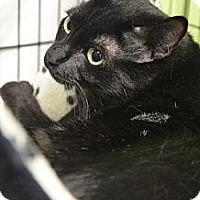 Adopt A Pet :: matt - Muskegon, MI