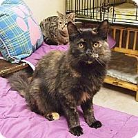 Adopt A Pet :: Maizee - Ocean City, NJ