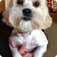 Adopt A Pet :: ROXI - Mission Viejo, CA