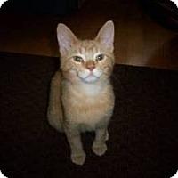 Adopt A Pet :: Carlo - Milwaukee, WI