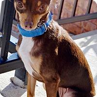 Adopt A Pet :: Dixie-Adoption pending - Bridgeton, MO