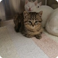 Adopt A Pet :: Amazon - Troy, OH