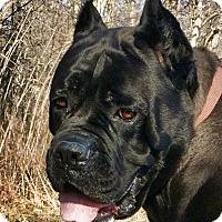 Adopt A Pet :: Nessia-OH - Virginia Beach, VA