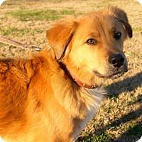 Adopt A Pet :: Maverick - Erwin, TN