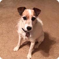 Adopt A Pet :: Jack in Dallas - Austin, TX