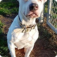 Adopt A Pet :: Blizzard - Terrell, TX