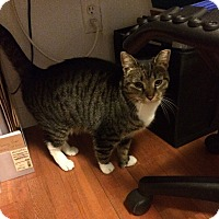 Adopt A Pet :: Pat* - Brooklyn, NY