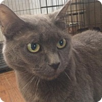 Adopt A Pet :: Lizzy-unbelieveable soft coat - Devon, PA