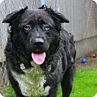 Adopt A Pet :: Jett - Shreveport, LA