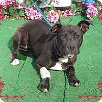 Adopt A Pet :: HEIDI - Marietta, GA