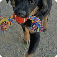 Adopt A Pet :: Karisma - Las Cruces, NM