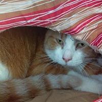 Adopt A Pet :: Poppy - South Haven, MI