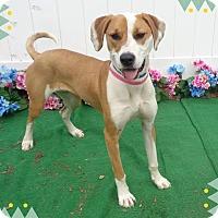 Adopt A Pet :: MARGO - Marietta, GA