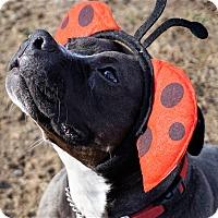 Adopt A Pet :: Gretal - Bruce Township, MI