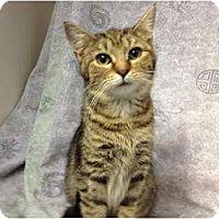 Adopt A Pet :: Arista - Orlando, FL