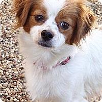 Adopt A Pet :: Emily - La Habra Heights, CA