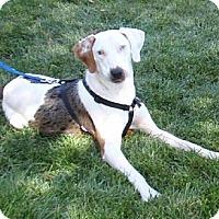 Adopt A Pet :: Charlie - Schererville, IN