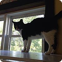 Adopt A Pet :: Junior - Lancaster, MA