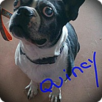 Adopt A Pet :: Quincy - Weatherford, TX