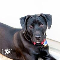 Adopt A Pet :: Chance - Franklin, VA