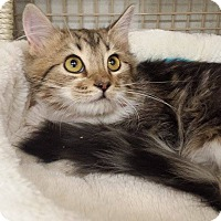 Adopt A Pet :: Kneesaa - Edmond, OK