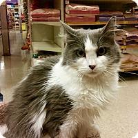 Adopt A Pet :: Lilly - Colmar, PA