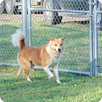 Adopt A Pet :: Jamboree - Lufkin, TX