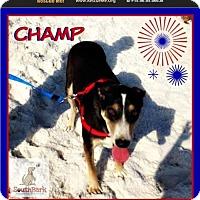 Adopt A Pet :: Champ - Pensacola, FL
