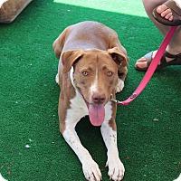 Adopt A Pet :: Sophie - Yuba City, CA