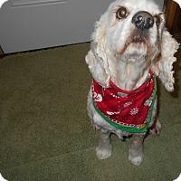 Adopt A Pet :: June -Adopted! - Kannapolis, NC