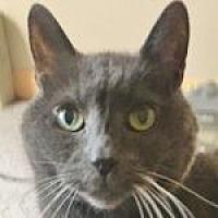 Adopt A Pet :: Nik - Medford, MA