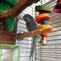 Adopt A Pet :: Cheumani - Neenah, WI