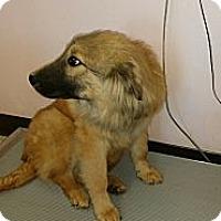 Adopt A Pet :: Zeus - Somers, CT