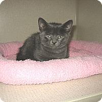 Adopt A Pet :: SIMON - 2014 - Hamilton, NJ