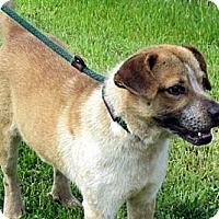 Adopt A Pet :: ABERCROMBIE - Glastonbury, CT