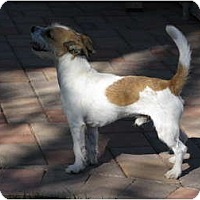 Adopt A Pet :: SPARKY - Scottsdale, AZ