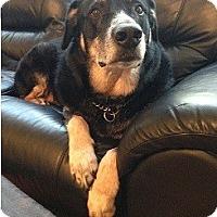 Adopt A Pet :: Fuggs - Hamilton, ON