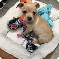 Adopt A Pet :: Baron - Gainesville, FL