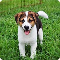 Adopt A Pet :: Houston - Franklin, VA