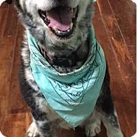 Adopt A Pet :: Maggie - Clarksville, TN