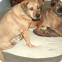 Adopt A Pet :: Katie - Camden, SC