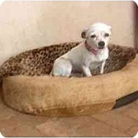 Adopt A Pet :: Minnie - Chimayo, NM