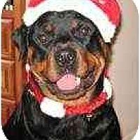 Adopt A Pet :: Nikki - Belleville, MI