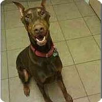 Adopt A Pet :: Bernie--adopted! - New Richmond, OH
