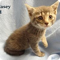 Adopt A Pet :: Casey - Bentonville, AR
