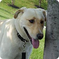 Adopt A Pet :: Artimis - Lewisville, IN