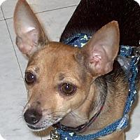 Adopt A Pet :: Rudy 2017 (m/c) - Chesterfield, MI